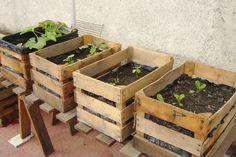 Garden Deco, Veg Garden, Vegetable Garden Design, Garden Boxes, Edible Garden, Balcony Garden, Garden Planters, Build A Greenhouse, Paper Flowers Diy