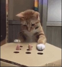 Whack-a-mole: cat version. Foto com animação