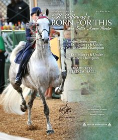 CH Callaway's Born For This...American Saddlebred