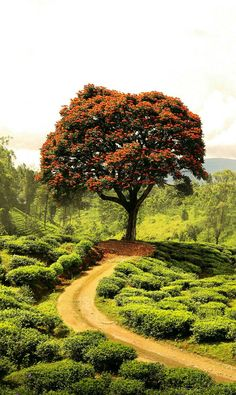 Do want a tree? Beautiful Nature Wallpaper, Beautiful Landscapes, Landscape Pictures, Nature Pictures, Landscape Photography, Nature Photography, Nature Tree, Art Nature, Parcs