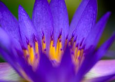 https://flic.kr/p/rFgYuD | WaterLily_2015-03-28_0008-2 | Water-lily