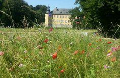 Schloss Dyck bei Neuss | wild flowers