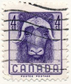 Wildlife Series, Musk Ox (issued 1955)