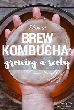 How to Brew Tasty Kombucha: Growing a Scoby Kombucha Scoby, How To Brew Kombucha, Kombucha Recipe, Making Kombucha, Kombucha Benefits, Kombucha Flavors, Probiotic Drinks, Best Probiotic, Detox Drinks
