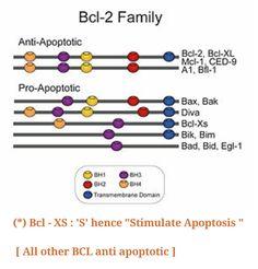 BCL family & Apoptosis ...