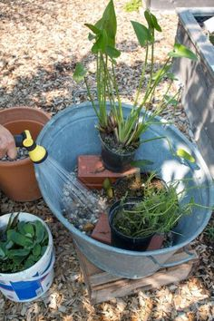 Create a mini pond in a bucket yourself - Bepflanzung Back Gardens, Small Gardens, Outdoor Gardens, Mini Pond, Container Water Gardens, Hydroponic Gardening, Plantation, Gardening For Beginners, Gardening Tips