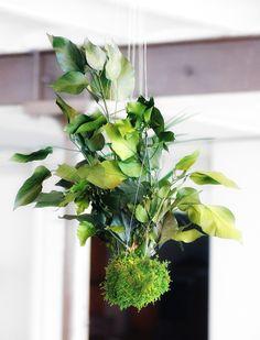 Jardins suspendu réalisé par Adventive. Plantes stabilisées.Création et réalisation Adventive.Interior plant Designer