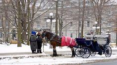 Horses, Animals, Winter, Animales, Animaux, Horse, Animal, Animais, Dieren