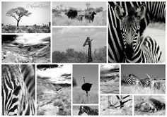 This is a combination of some of my favourite wildlife and landscape pictures that I've taken over the last year. I love monochrome i. Landscape Pictures, Monochrome, Wildlife, Black And White, Animals, Art, Art Background, Scenery Paintings, Animales