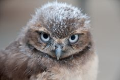 50 Fluffy Owl Chicks That Require Your Attention