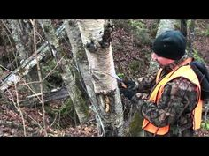 ▶ WHERE TO FIND AND HARVEST CHAGA ! - YouTube
