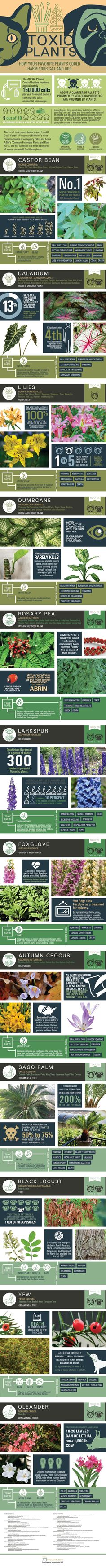 12 most toxic plants to pets #Infographic #Pets #Cats #Dogs