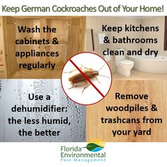 how to keep cockroaches out