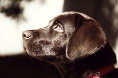 Does My #Dog Need a Coat? #DogClothes #Dogcoats #tips