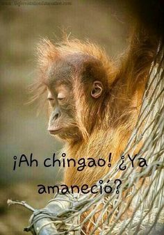 Mexican Funny Memes, Mexican Humor, Funny Spanish Memes, Spanish Humor, Funny Jokes, Cute Funny Animals, Funny Animal Pictures, Funny Photos, Pepito Jokes