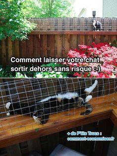Comment Laisser Votre Chat Sortir Dehors SANS Aucun Risque.