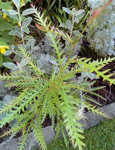 perigo jardim: plantas preferidas, no final de setembro