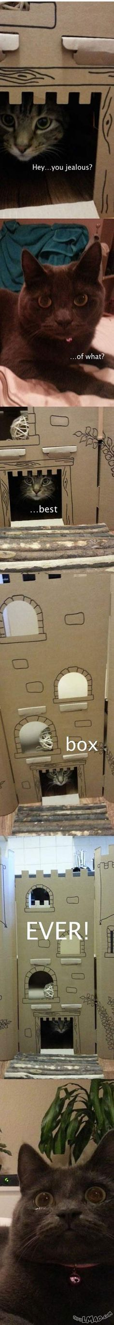 Lawl.. you will love this! Cat castle | #box, #cat, #castle, #funny
