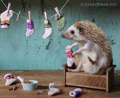 ちくかわいい!擬人化ハリネズミのファンタジーな写真集