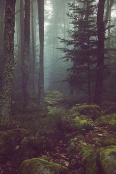 deep mysterious theme into the wild forest trees fog nature green foggy moody adventure explore hiking idea ideas inspiration landscape photography Fern Forest, Wild Forest, Foggy Forest, Misty Forest, Forest Plants, Redwood Forest, Conifer Forest, Landscape Photography, Nature Photography