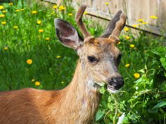 These 5 Stories of Amazing Times Wild Animals Saved People in Need Will Leave You Awe-Struck Deer Fence, Crop Production, One Green Planet, Dream Garden, Outdoor Gardens, Plants, Fences, Gardening, Outdoor Stuff