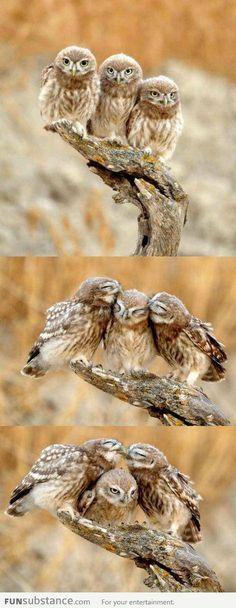 Forever Alone Owl