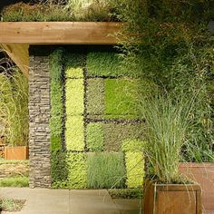 Green Wall of Succulents, grasses and ajuga on a city rooftop. Rooftop building has a green roof as well. The inspiration for the green wall design was Mondrian. Rebecca Cole Design