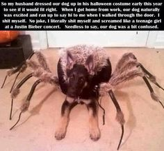 Dog spider costume - I would die if Nicely did this....
