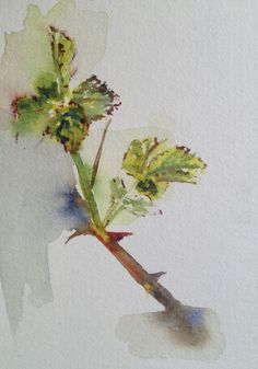 """""""Spring Bramble"""" by Vandy Massey. Watercolour on Paper, Subject: Flowers and plants, Impressionistic style, One of a kind artwork, Signed on the front, This artwork is sold unframed, Size: 15 x 20 cm (unframed), 5.91 x 7.87 in (unframed), Materials: Watercolour on 300gsm paper"""