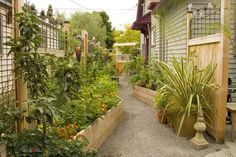 Darcy Daniels' amazing sideyard kitchen garden in Portland, OR. What a great use of a normally wasted space!