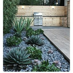 DIY Arizona backyard landscaping design www. Outdoor Landscaping, Front Yard Landscaping, Outdoor Gardens, Landscaping Ideas, Black Rock Landscaping, Landscaping With Large Rocks, Pebble Landscaping, Decking Ideas, Succulent Landscaping