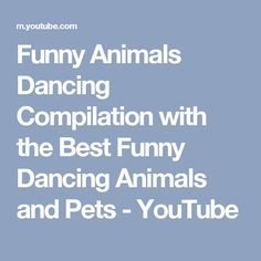 Funny Animals Dancing Compilation with the Best Funny Dancing Animals and Pets - YouTube
