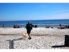 pet friendly - Seapines,golf disc updated,bikes,wifi,good beach70 - Sea Pines - rentals