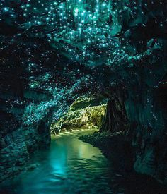 Waitomo Glow worm Caves, New Zealand                Amazing Places you Should Visit in Your Life, Part 1
