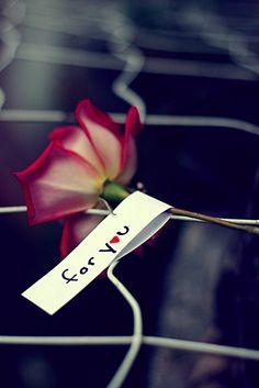 Single Rose :)