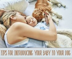 Tips and tactics to ensure a safe and happy living environment for everyone. Living Environment, Nursery Inspiration, Dog Training Tips, Baby Hacks, Four Legged, Baby Feeding, Baby Sleep, How To Introduce Yourself, Breastfeeding