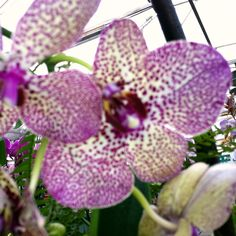 Orchid (Day 26) #30DoC #ColorsInNature 30 Day, How To Take Photos, Orchids, Creativity, Artist, Nature, Plants, Color, Naturaleza