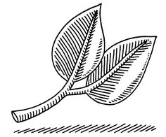 Two Leaves Nature Symbol Drawing