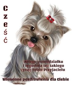 Good Night Blessings, Goeie Nag, Afrikaans Quotes, Yorkshire Terrier, Animals, Aga, Language, Sweet, Blog