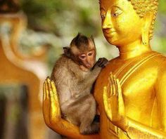 This monkey knew where to rest.  Spread by www.compassionateessentials.com and http://stores.ebay.com/fairtrademarketplace/