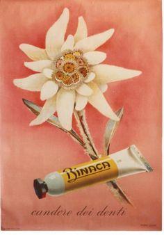 Original vintage poster BINACA TOOTHPASTE EDELWEISS 1942