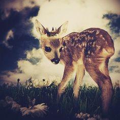The Little Deer Prince, Inch Print, Deer Print, Woodland Fairytale Art Print Woodland Art, Woodland Animals, Woodland Creatures, Bambi, Deer Art, Fairytale Art, Fox Art, Oh Deer, Vintage Design