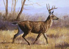 Deer Pictures, Pictures To Paint, Deer Pics, Wildlife Paintings, Wildlife Art, Deer Paintings, Deer Drawing, Deer Art, Pastel