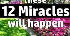 If you Use Vinegar in the Garden these 12 Miracles will Happen | Gardens, Vinegar uses and The o'jays