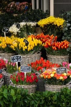 """~Rue Cler flower market, Paris:: Paris has never been a """"must do"""" destination for me, but these tulips could change my mind French Flowers, Beautiful Flowers, Exotic Flowers, Purple Flowers, Tropical Flowers, Flowers For Sale, Flower Market, Flower Shops, I Love Paris"""