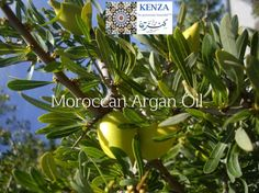 Argan oil: A Moroccan craft - A day at a women cooperative