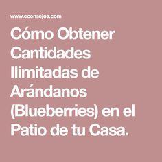 Cómo Obtener Cantidades Ilimitadas de Arándanos (Blueberries) en el Patio de tu Casa. Flora, Patio, Gardening, Natural, Ideas, Gardens, Home, Growing Up, Fruit Trees