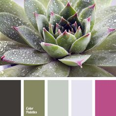 color matching for home, color of leaves, dark green, gray, gray and pink, greenery, pink, shades of gray, shades of green, silver, silver color, wedding color scheme, white color.