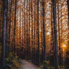 New free stock photo of environment forest golden hour Good Morning World, Golden Hour, Bushcraft, Free Stock Photos, Nature Photography, Environment, Country Roads, Adventure, Plants
