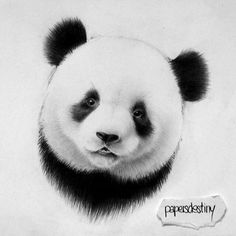 Read from the story d& - by janeheather (night Panda Love, Cute Panda, Image Panda, Panda Sketch, 1 Tattoo, Cute Animal Drawings, Bored Panda, Pyrography, Drawing Sketches
